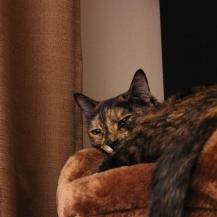 kitty 007